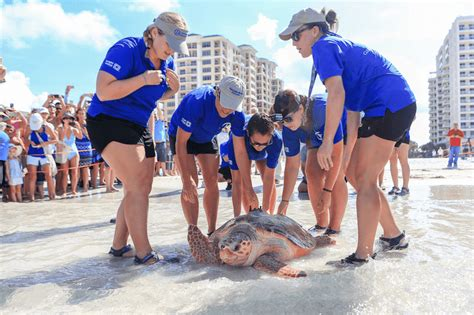 Spend the Day at Clearwater Marine Aquarium