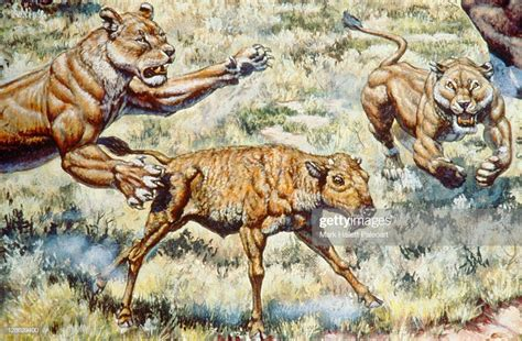 American Lion Of North America Stock Illustration | Getty