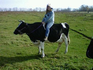 7 Pictures of People Riding Cows   HORSE NATION