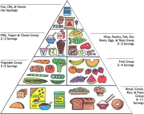 Pyramide des aliments (With images)   Food pyramid kids