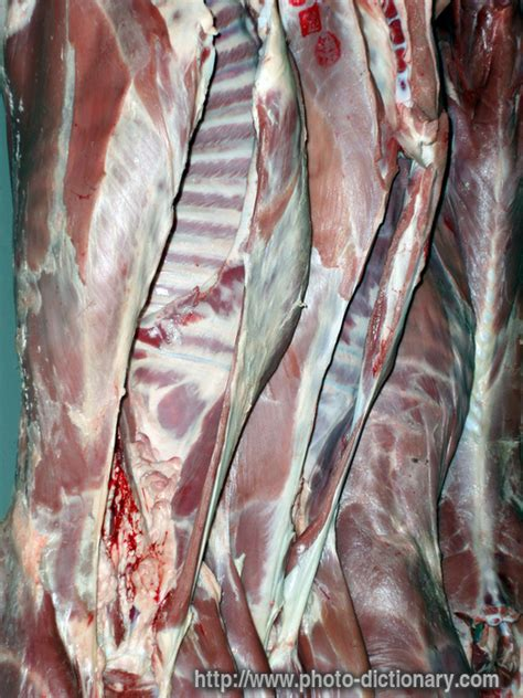 abattoir - photo/picture definition at Photo Dictionary