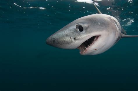 Parlons requin - WWF-Canada Blogue