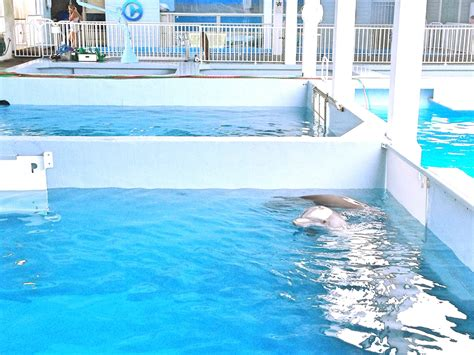 Winter has Hope: A Dolphin Tale 2 Movie Review