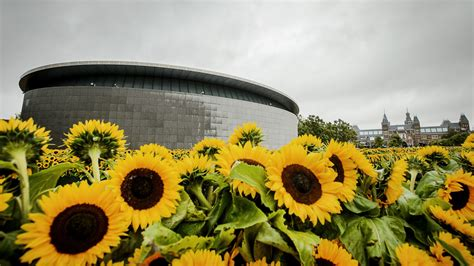 The Van Gogh Museum in Amsterdam is home to a sunflower